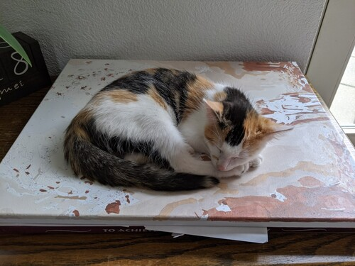 Gwen keeping Donny's paintings safe