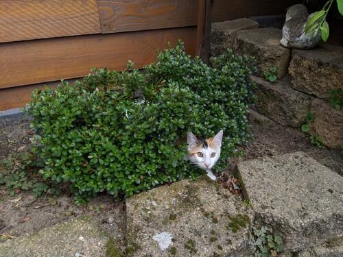 Gwen helping in the garden